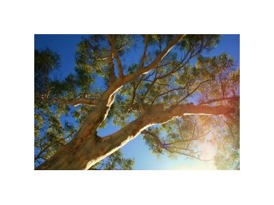 Eoné Přírodní silice - Eukalyptus Austrálie